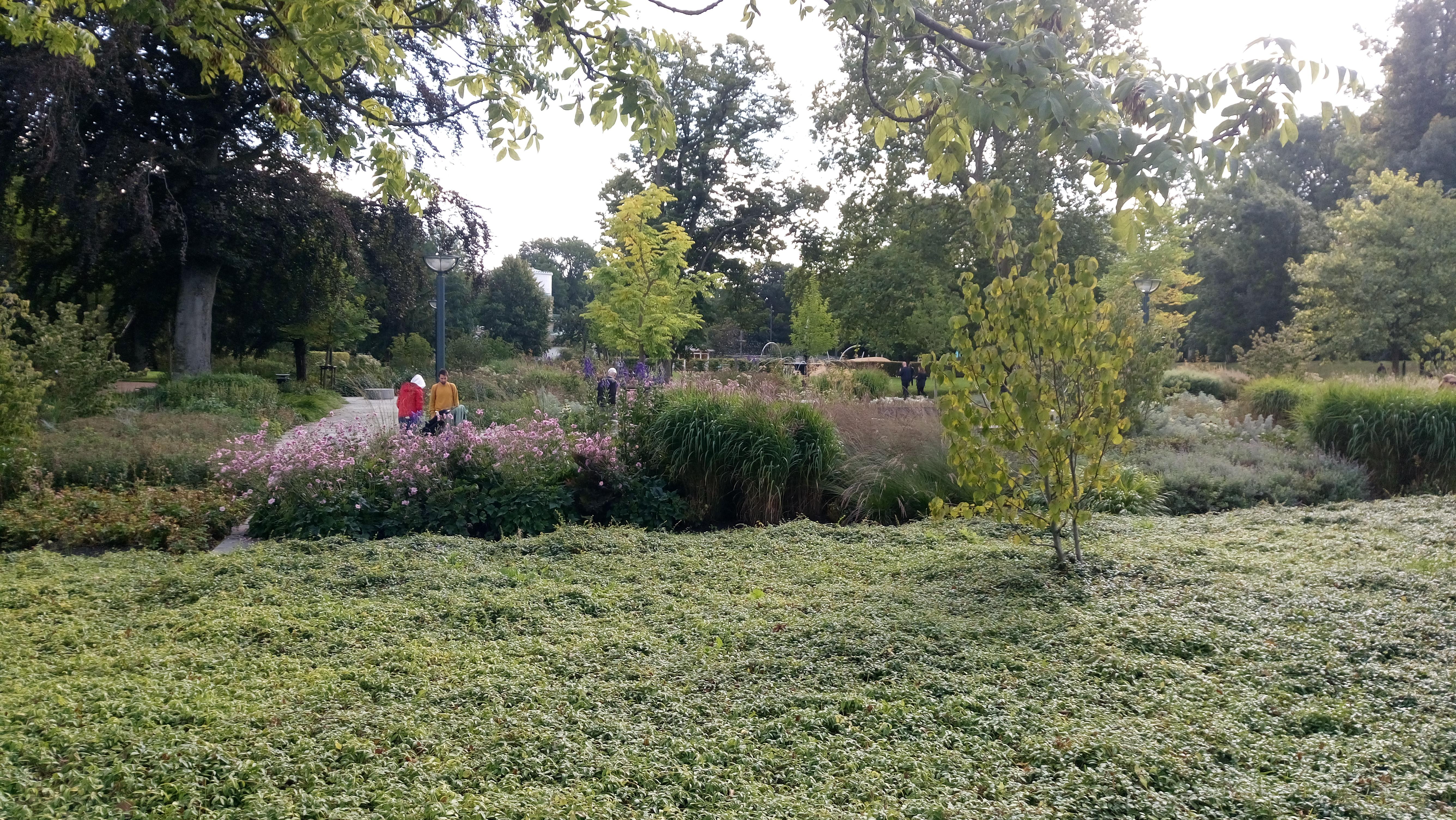 Solens och skuggans trädgård. Hav av vintergröna med näsduksträd i buskform.