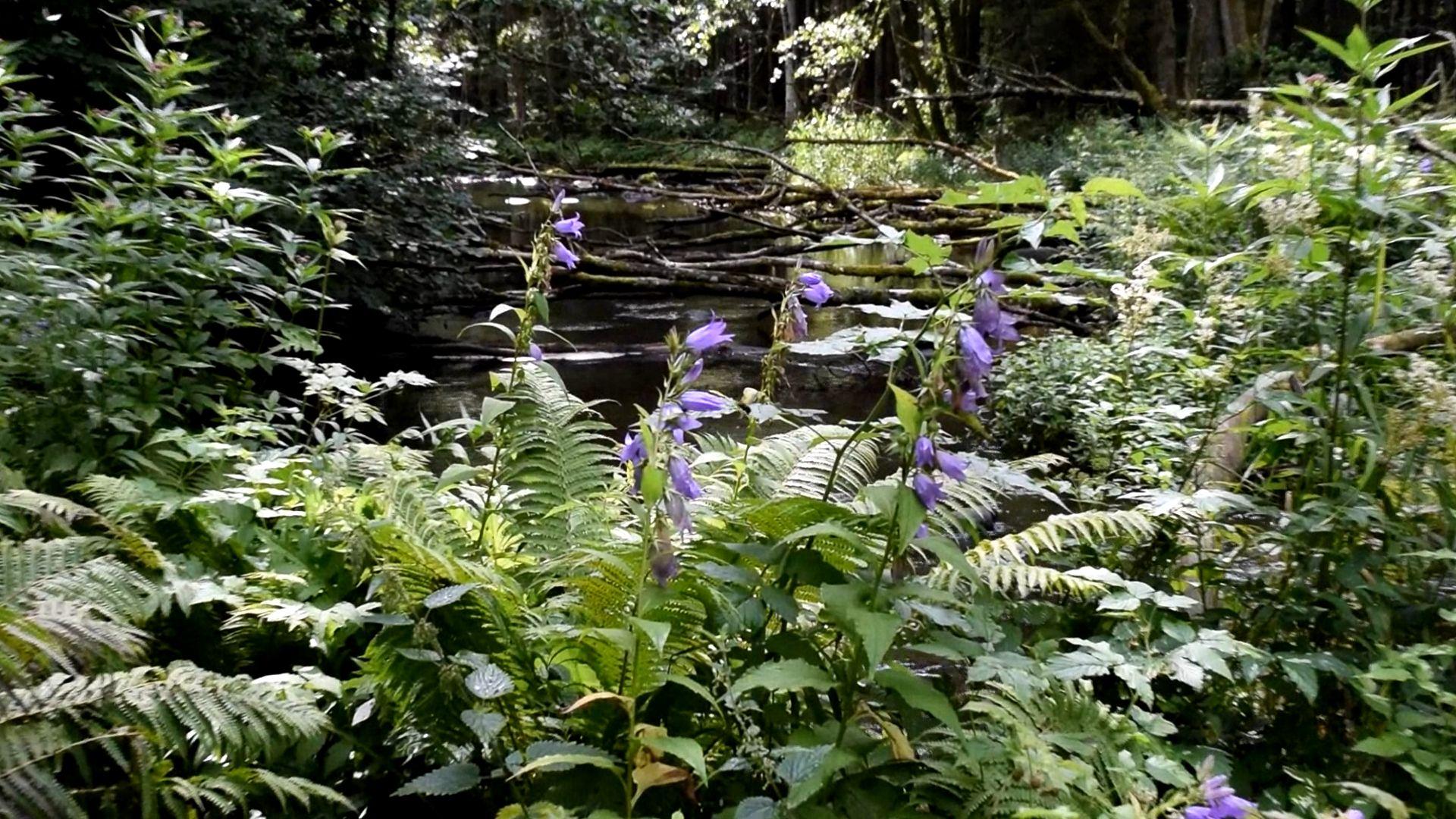 Utemiljön och vår hälsa, skogsmiljö