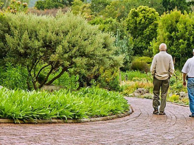 Två äldre i en trädgård