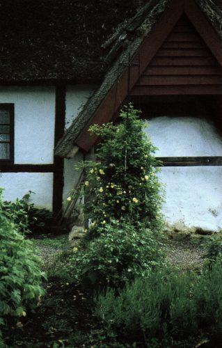 allmogeträdgården, slingerväxter