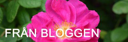 från bloggen