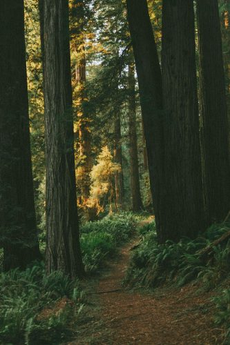 inspiration skog
