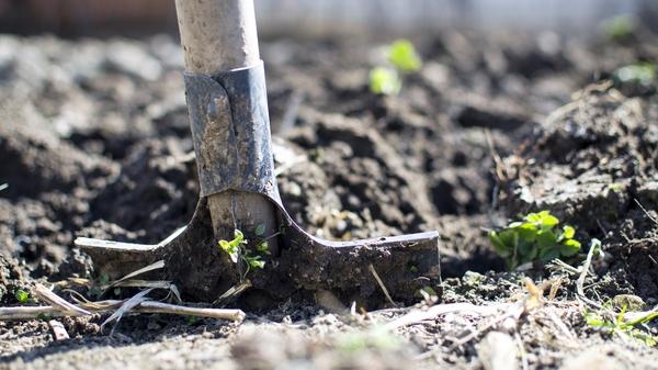 trädgårdsarkitekten och trädgårdedesign