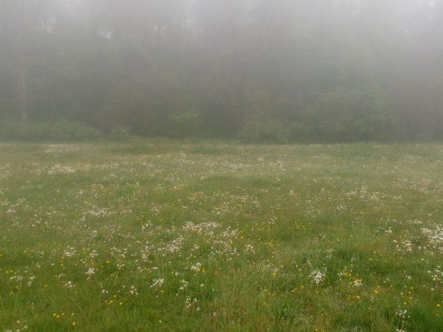 Ängarna vid Lillevik på Österlen