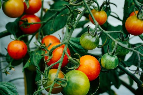 Odling och anläggning