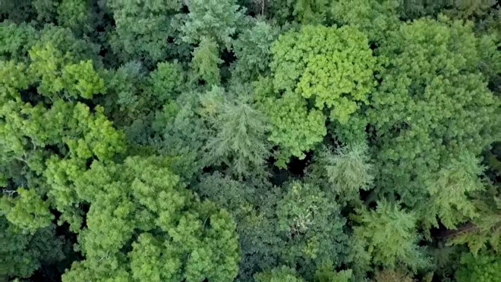 Forest Garden – Skogsträdgård
