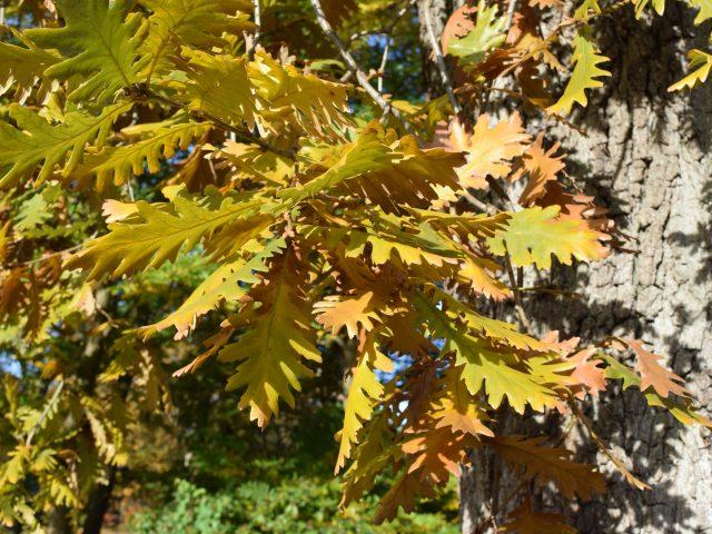 trädgårdsdesign på hösten