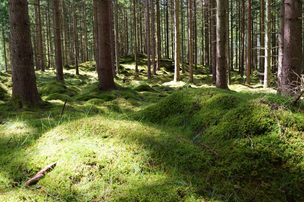 Shinrin Yoku skogsbad