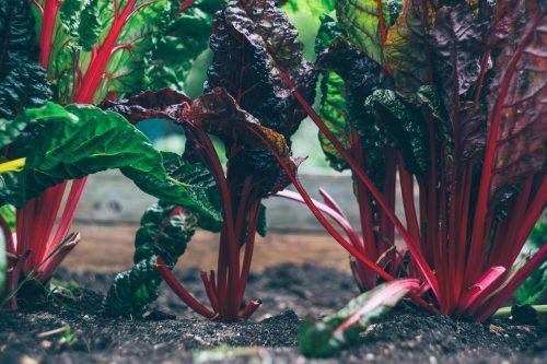 Odla grönsaker inspirerad av din kokbok